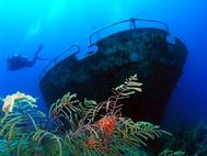 John at the Bow of the Sea Star Grand Bahamas Basket star in forground